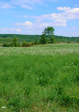 View of green meadow in natural area